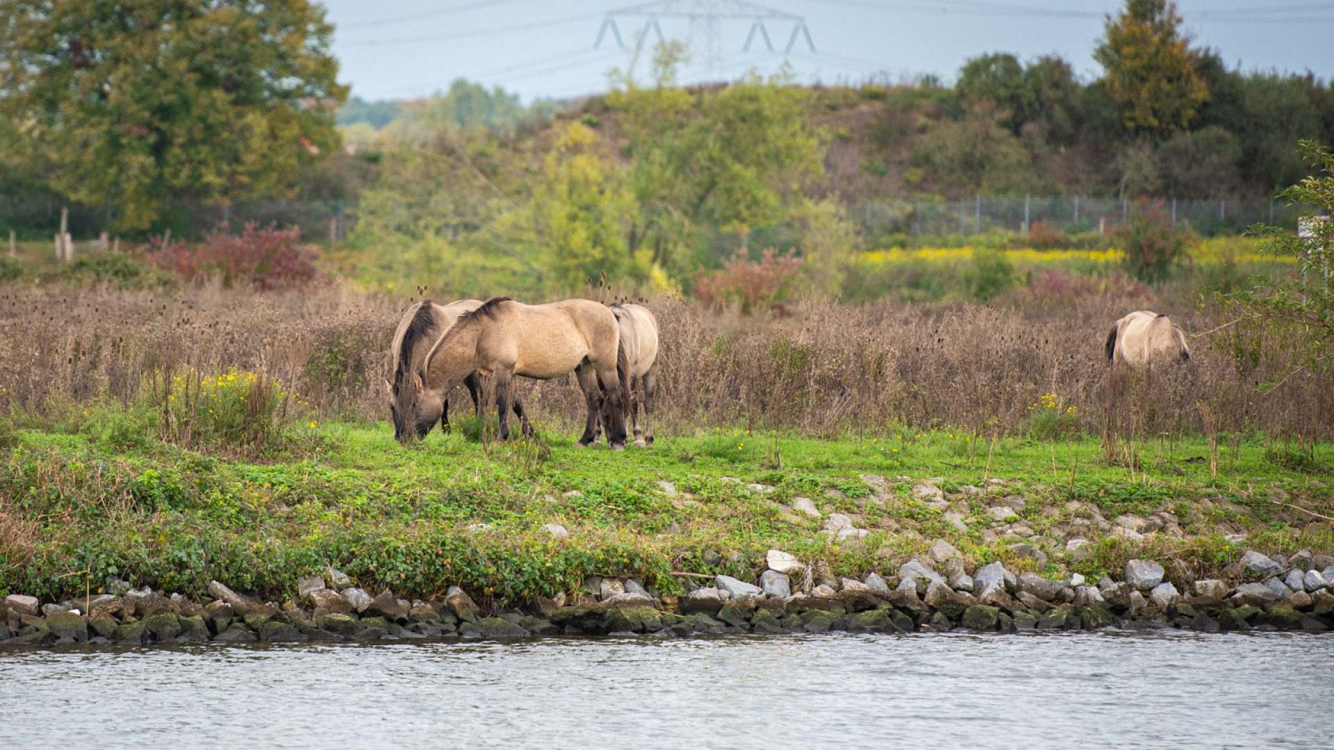 Want to spot wild animals on the banks of the Grensmaas?